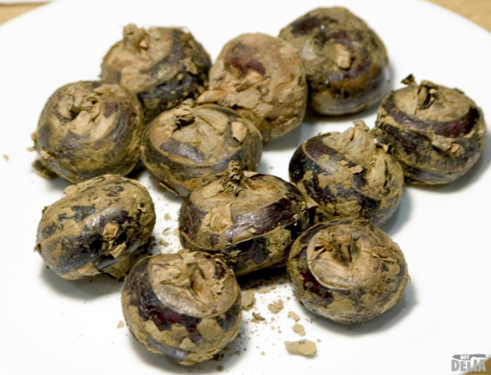 Whole unpeeled fresh water chestnuts on a plate